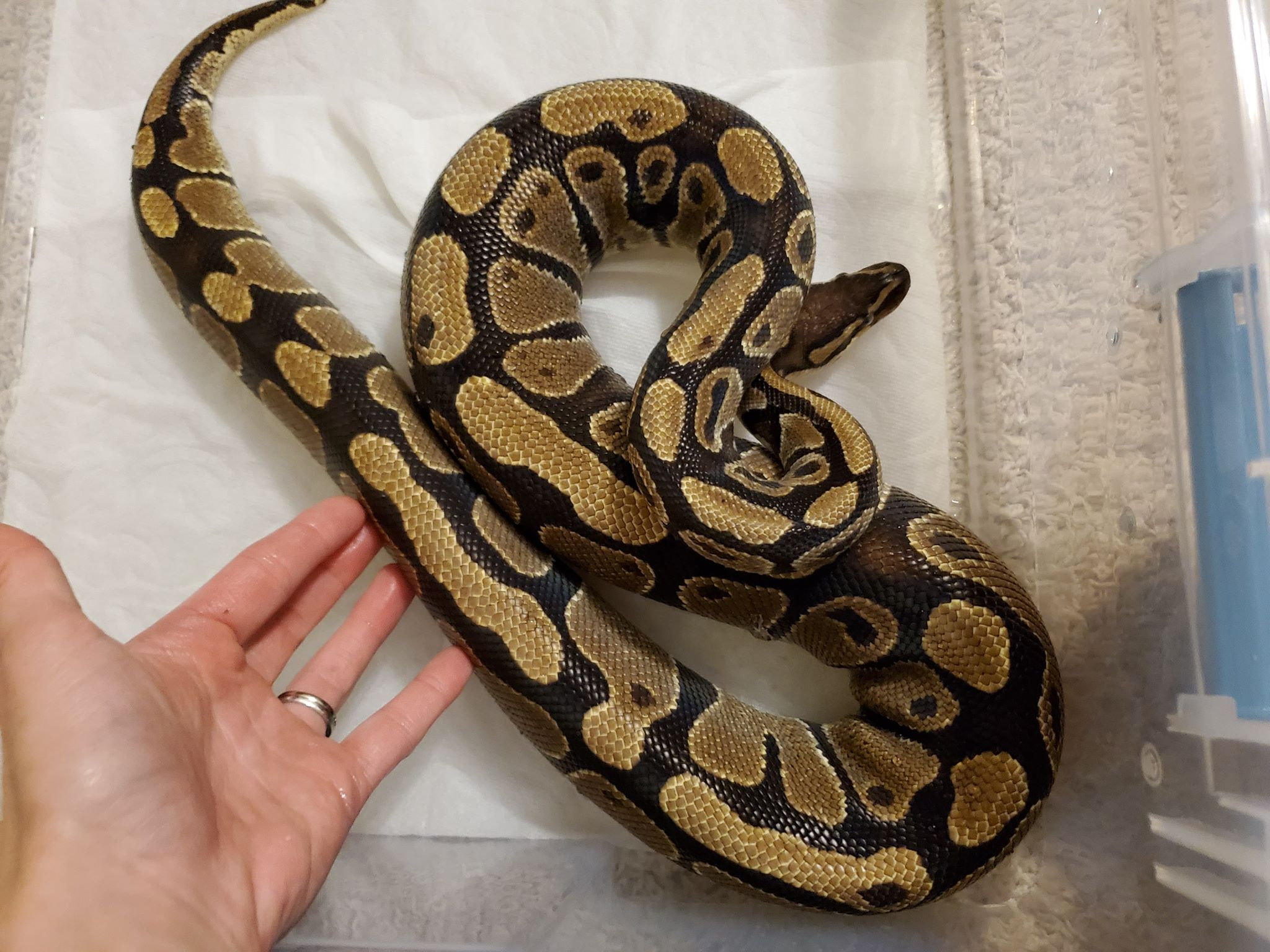 Available Reptiles