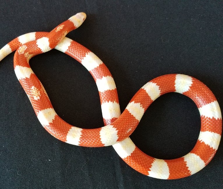 Meet the Snakes!